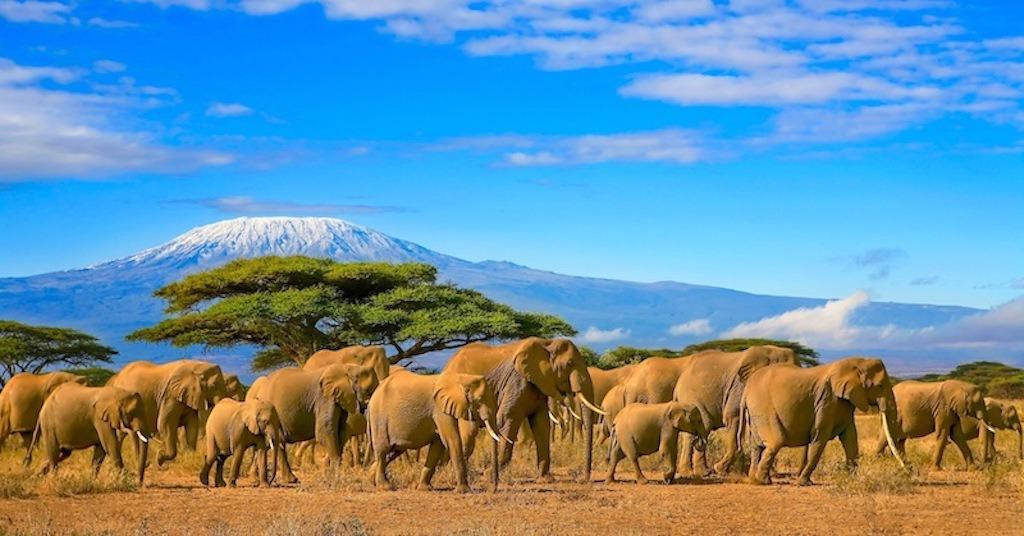 Troupeau d'éléphants au Kenya